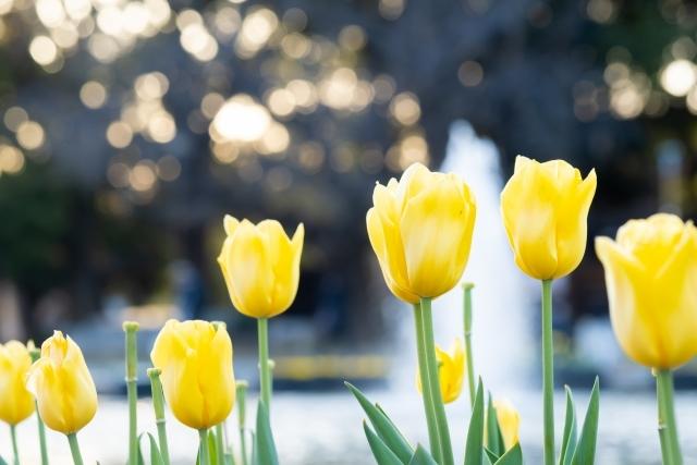 春のOPEN GARDEN 4月開催予定