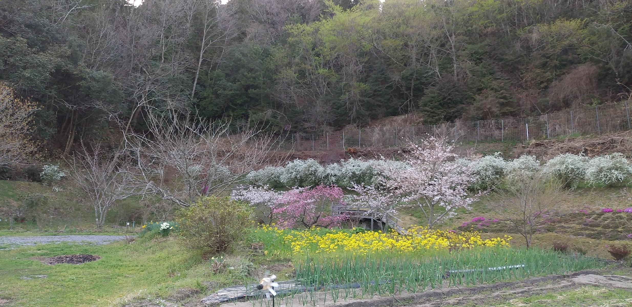 Photo_21-03-30-15-15-00.431.jpg