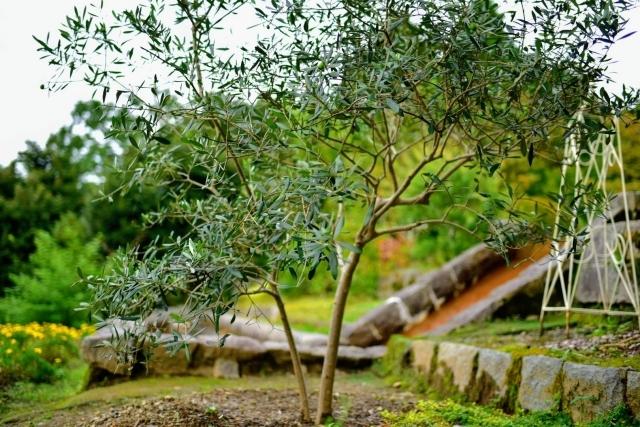 【庭の植物】常緑樹の特徴やメリットデメリットとは?