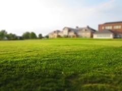 【芝生】芝刈り頻度を減らせる芝生、トヨタ自動車が開発した高麗芝TM9