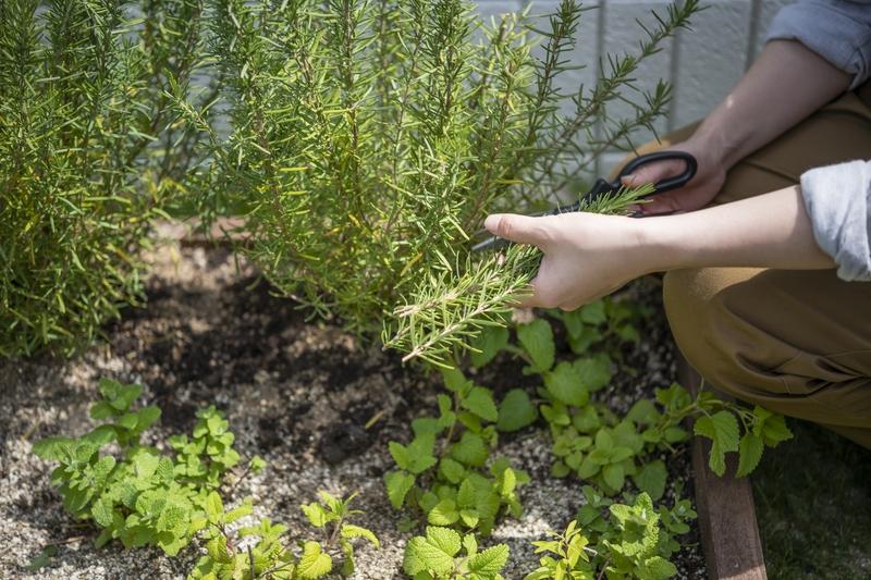 野菜・ハーブの育成。プランター栽培からステップアップ。